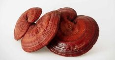 The company sells safe Japanese Ganoderma in Da Nang – Table Ideas Healthy Coffee Drinks, Unique Dining Tables, Natural Coffee, Herbal Cure, Mushroom Fungi, Medicinal Herbs, Natural Medicine, Health Benefits, Herbalism