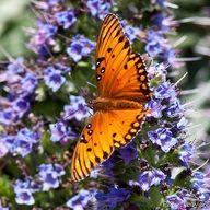 ❦.Butterfly ❦ pretty one