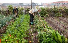 ØsterGRO Urban Farming in Copenhagen