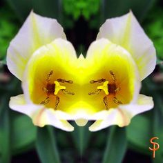 """Tauch ein in die Anderswelt """"Tulpengeist"""" 🌷🌷🌷 kreativesbypetra Petra, Plants, Plant, Planets"""