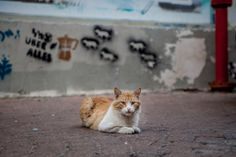 Holy Cats - Flickr site from a favorite photographer on the cats of Israel. Right on target (Nov13)