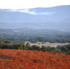 Beside winemaking we care also with other things. Também nos preocupamos com outras coisas para além do vinho.  #Alentejo - Portugal www.herdadesaomiguel.com