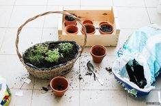 Flowerpot from old wooden basket