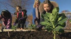 Lettuce, salad and vegetables aren't the usual things that spring to mind when you think of the kind of food that children enjoy.  But one school in Liverpool has found a novel way to buck the trend.  And they may even have turned some of their pupils into budding-gardeners as well.  Tim Scott reports.