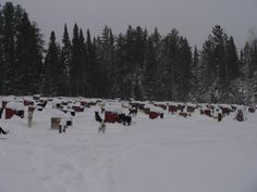 Sled Dog yard, the dogs were crazy for the new snow.  www.whitewilderness.com