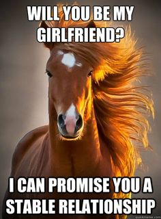 Will you be my girlfriend? I can promise you a stable relationship Ridiculously Photogenic Horse