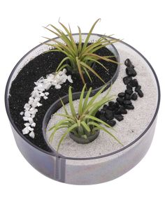 Serene yin yang design desktop zen garden with living air plants. (Buddhagroove $48) I need to make one of these for myself. I simply need to get the Ying Yang container, the rocks. My friend who owns a flower shop told me she'd give me the air plants. ッ ღ