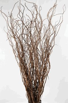 Curly Willow Branches 36in (Bundle of 10 branches) $12.99     save-on-crafts
