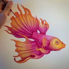 Sanjana Makes Art — Betta Splendens fish painted in my watercolour...