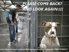 #Dog #shelters : #adopt don't buy!!! (btw this photo made me cry...)