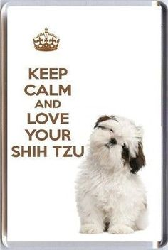 A fridge magnet with a picture of a cute Shih Tzu with the words KEEP CALM AND… Cute Puppies, Cute Dogs, Dogs And Puppies, Shih Tzu Puppy, Shih Tzus, Animals And Pets, Cute Animals, Dog Costumes, Keep Calm And Love