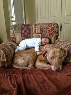 20 Heart Touching Photos that shows Pit Bull Kindest Dog in the World - Top New Today