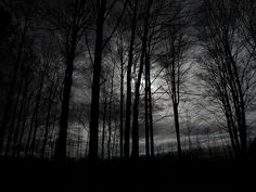Silhouette of Beech Trees at Sunset