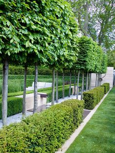 Hicks Yew Hedges (Taxus x media 'Hicksii') is an American-bred, upright, evergreen hedge. Fence Landscaping, Backyard Fences, Nice Backyard, Backyard Trees, Evergreen Hedge, Soil Improvement, How To Grow Taller, Drought Tolerant, Outdoor Walls