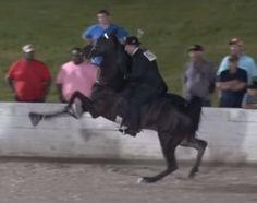 Sored Horse Wins World Grand Championship