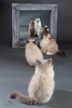 """* * """" Dem kittehs beez trapped in a portal! Dey looks just likes us. We gotta helps dem. Are dey in de air too? """""""