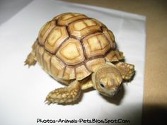 turtles | Cute baby turtles pictures