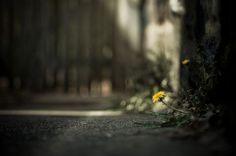creative photography by Brooke Pennington