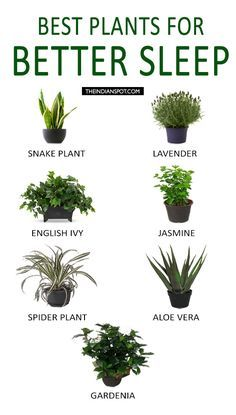 BEST PLANTS TO KEEP IN YOUR BEDROOM TO HELP YOU SLEEP