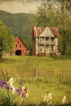 Old farmhouse and barn. I love that the Irises keep on growing long after anyone is there to see them.