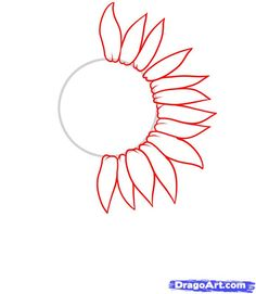 how to draw a sunflower step 2