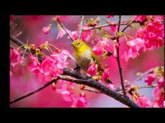 Schubert - Serenade - YouTube