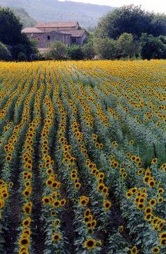 Chianti Toscana: Chianti country, Italy >> Sfoglia le Offerte!