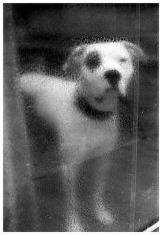 Dog in Florence gelatin silver print selenium toned photograph di SilverprintArte su Etsy