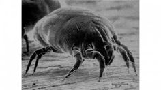 Google Image Result for http://images.gizmag.com/hero/electron-microscope.jpg - good info on electron microscope - this is a common dust mite