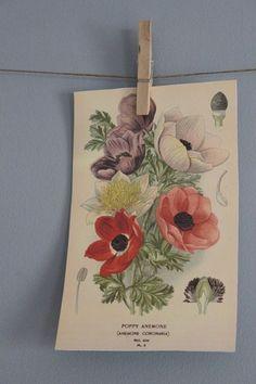Vintage Flower Printables