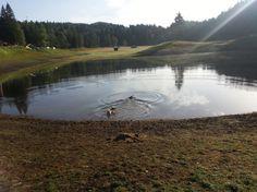 8 + 2 Tipps für Baden mit Hund in Tirol Mountains, Dogs, Nature, Travel, Bathing, Pet Dogs, Tips, Naturaleza, Viajes