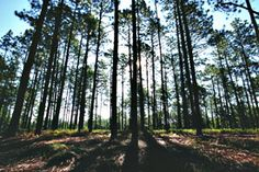 VISIT:  Weymouth Woods-Sandhills Nature Preserve (910) 692-2167 weymouth.woods@ncparks.gov  1024 Ft. Bragg Road, Southern Pines, NC 28387 GPS: 35.1469, -79.3690