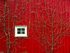 white window and vines on vivid red