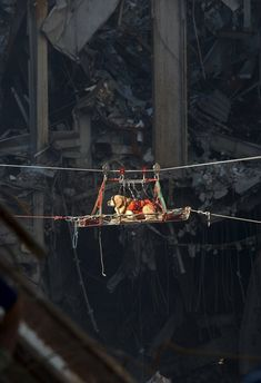 A very calm, brave rescue dog being transported out of the debris of the World Trade Center