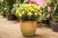 Blog sobre jardinagem e paisagismo. Saiba como cultivar flores, bulbos, bromélias, orquídeas, suculentas, arbustos e muito mais.