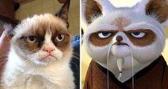 Le Grumpy Cat et Maître Shifu de Kung-fu Panda