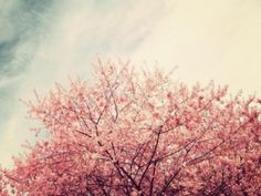 All Things Pink and Beautiful by riczkho