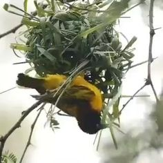 This is one hard-working little bird. He's giving a sewing lesson. Nature Animals, Animals And Pets, Funny Animals, Cute Animals, Beautiful Gif, Beautiful Birds, Animals Beautiful, Cute Birds, Pretty Birds