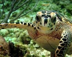 Happy New Year from the Ocean Conservancy. Please help to conserve our oceans, where my heart is.