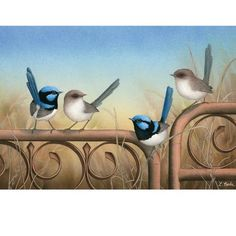 Farm Paintings, Animal Paintings, Australian Animals, Australian Art, Beautiful Birds, Animals Beautiful, Detailed Paintings, Feather Art, Watercolor Bird