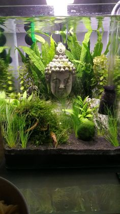 A place for aquatic flora and fauna enthusiasts! Whether you have a question to ask or a planted tank to show off, this is the place. Cool Fish Tanks, Tropical Fish Tanks, Fish Aquarium Decorations, Cool Fish Tank Decorations, Aquariums, Fish Tank Themes, Fish Tank Terrarium, Goldfish Tank, Fish Tank Design