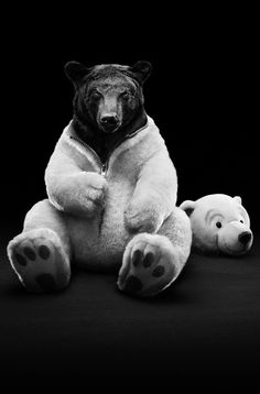 Brown bear dressing up as polar bear