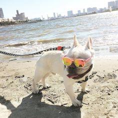 stroll along the beach... どんよりなお天気が続くなんてヤダな by halo_sunnyday