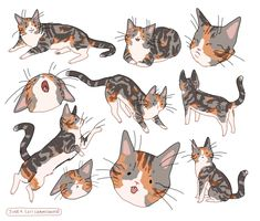 Cute Animal Drawings, Animal Sketches, Art Sketches, Art And Illustration, Illustrations, Character Inspiration, Character Art, Warrior Cats, Cat Drawing