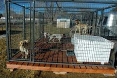 Outdoor:How To Build A Dog Kennel Wood And Concrete How to Build a Dog Kennel