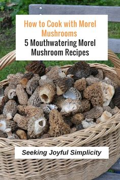 Easy and delicious morel mushroom recipes - try these 5 mouthwatering morel mush. - Easy and delicious morel mushroom recipes – try these 5 mouthwatering morel mushroom recipes. Moral Mushrooms, Morel Mushroom Recipes, Wild Mushrooms, Stuffed Mushrooms, Growing Mushrooms, Vegetable Drinks, Vegetable Dishes, Vegetable Recipes, Mushrooms