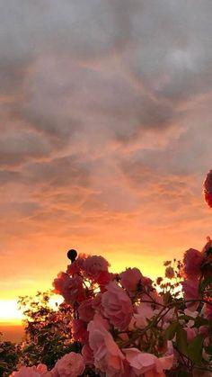 flower wallpaper Rose - - Celia Na. Tumblr Wallpaper, Wallpaper Pastel, Aesthetic Pastel Wallpaper, Sunset Wallpaper, Iphone Background Wallpaper, Aesthetic Backgrounds, Flower Wallpaper, Nature Wallpaper, Aesthetic Wallpapers