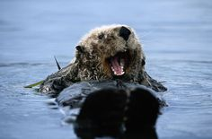 """""""I JUST CAME FROM THE MOST DELICIOUS CRAB BOIL!"""" 