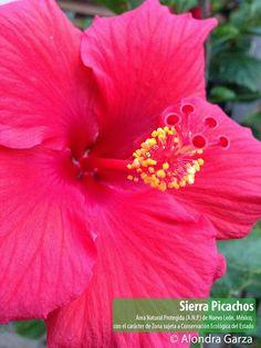 Flor en la Sierra