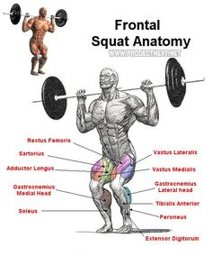 frontal squat anatomy